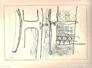 Finestra con uccello, 1959, 245x173