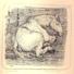 Cavallo stanco, 1956, 148x141