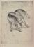 Cavallo selvaggio, 1967, 122x163